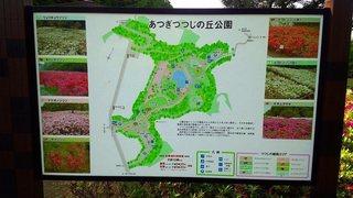 20150505_あつぎつつじの丘公園 (8).jpg