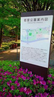 2050505_若宮公園(厚木市森の里) (4).jpg