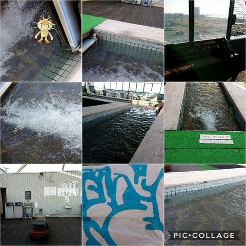 Collage 2017-11-06 19_34_05.jpg