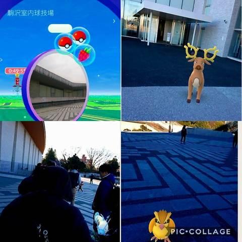 Collage 2018-01-14 15_47_49.jpg